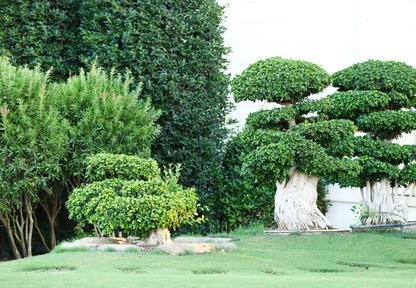 Beseitigung von Bäumen